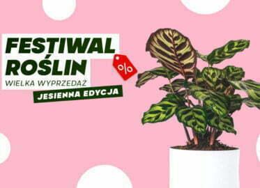Festiwal Roślin w Toruniu – 2021